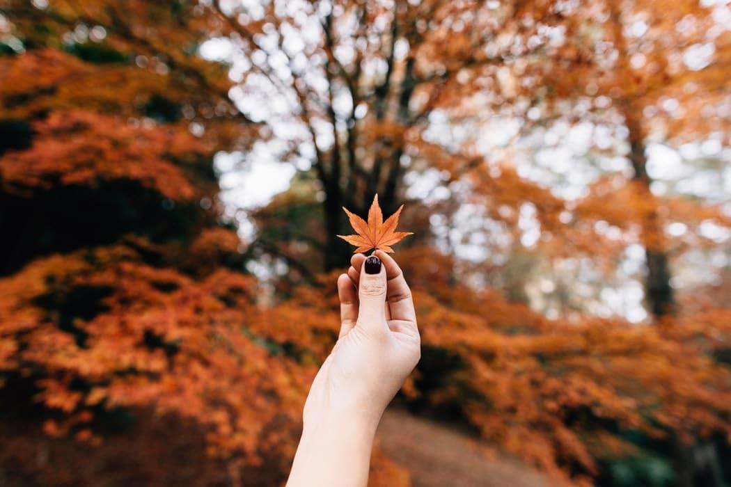 عکس های زیبای پاییزی مجموعه تصاویر و عکس پروفایل فصل
